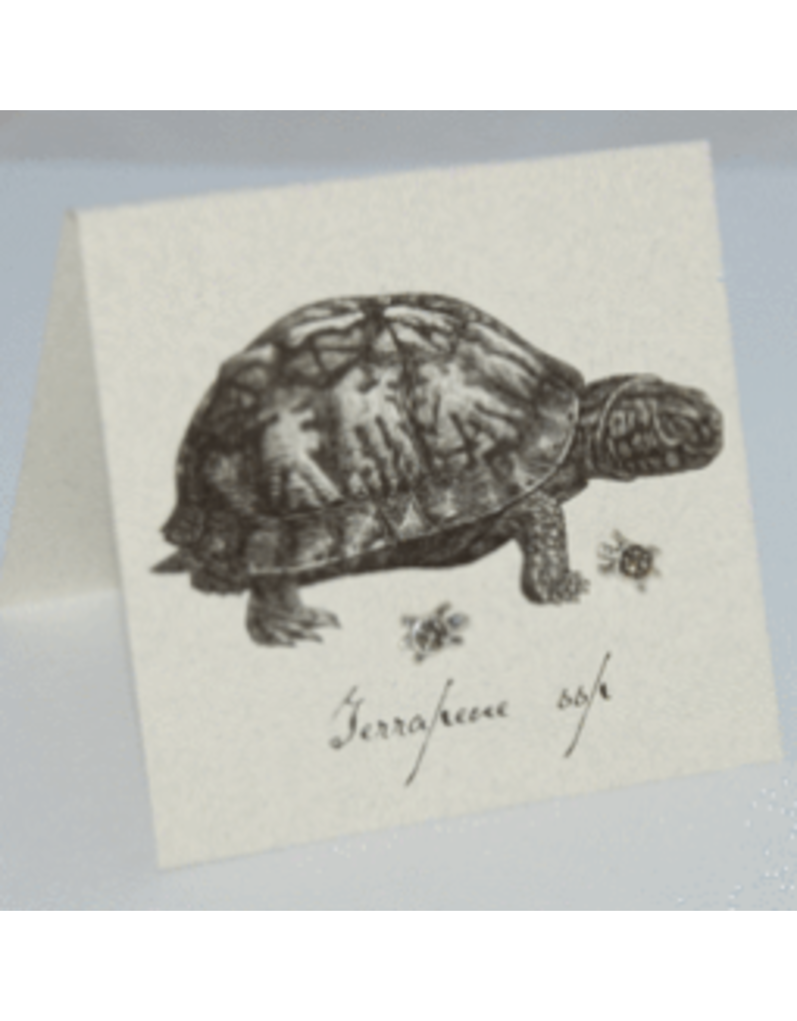 Natural History Turtle Marcasite Post E/R - ss