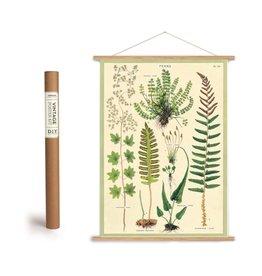 Cavallini Vintage Poster Kit Ferns