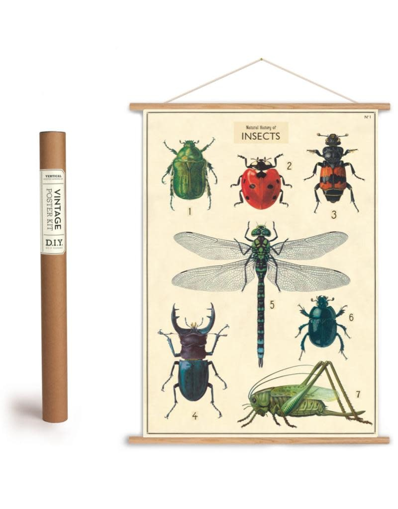 Cavallini Vintage Poster Kit Insects