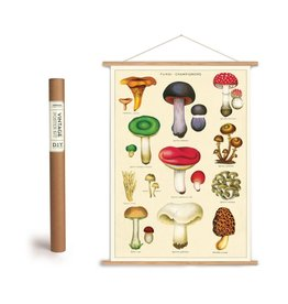 Cavallini Vintage Poster Kit Mushrooms 2