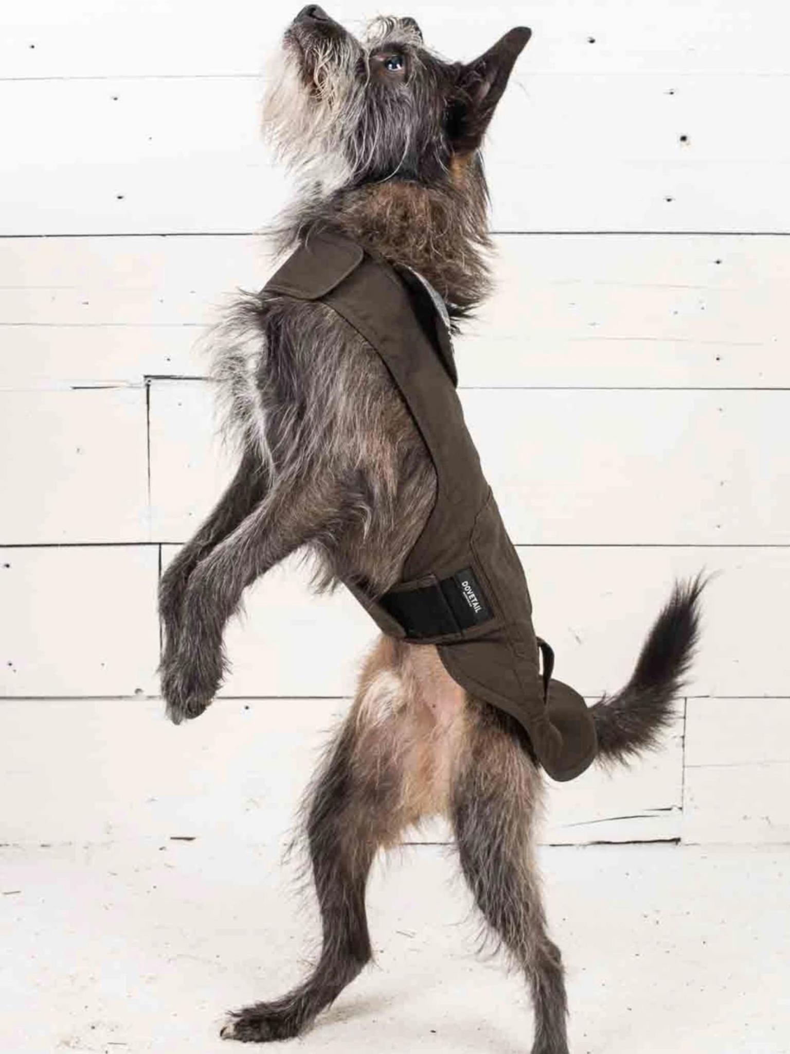 Dovetail Shasta Shop Dog Jacket