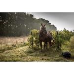 Cahors (3 pack) - Cosse et Maisonneuve Solis & Combal, Combel La Serre 'Pur Fruit du Causse'