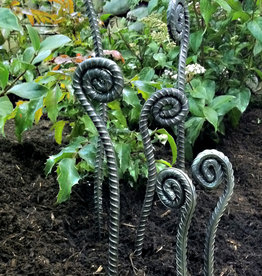 Shelly Durica-Laiche Fiddleheads Ferns