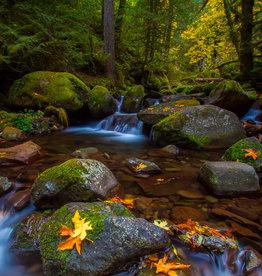 David Leonard Pacific Northwest Fall