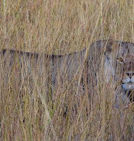 David Leonard Stealth Cat