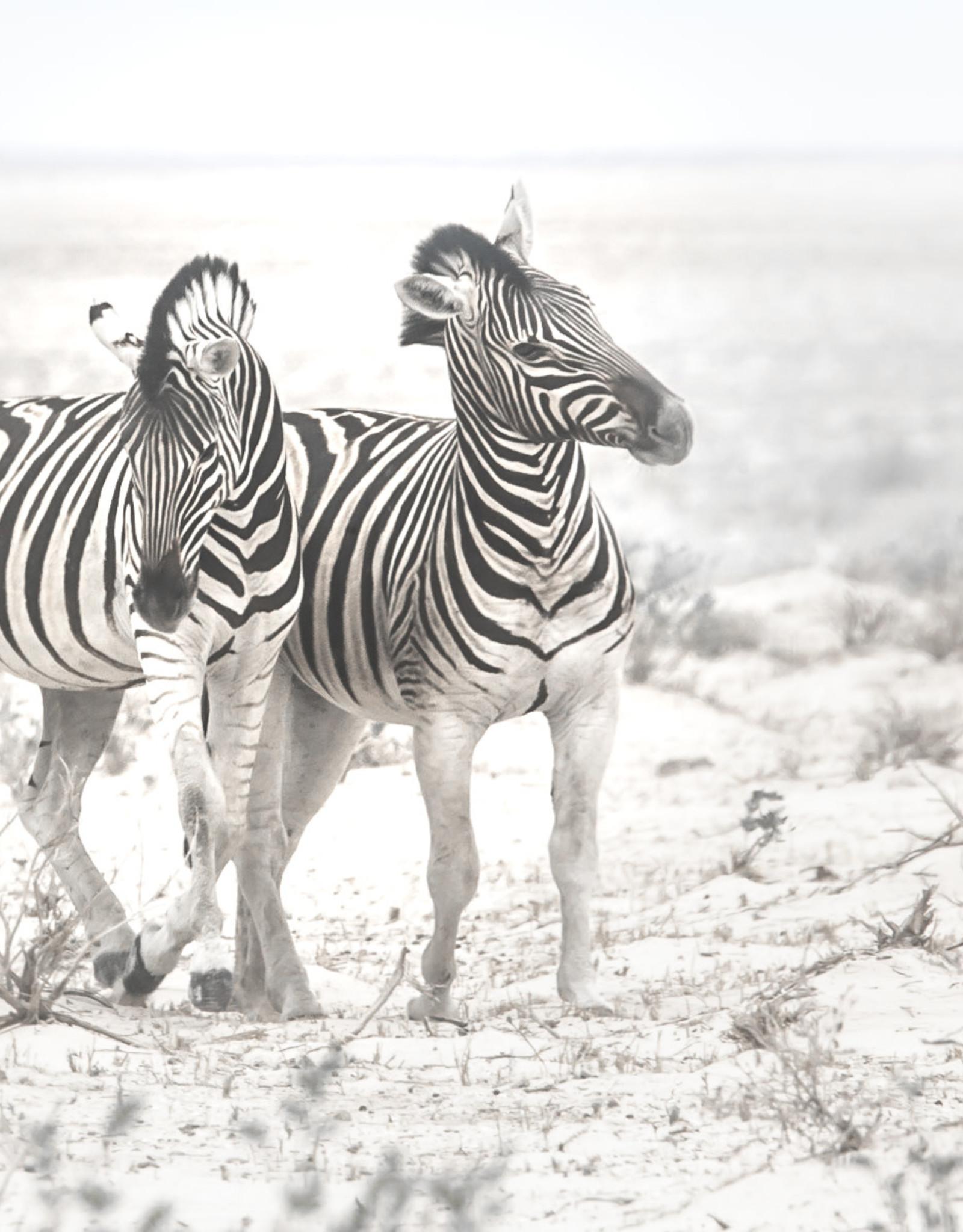 Alicia Hill Zebra's Frolicking in the Brush