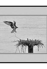 Erskine Wood Osprey