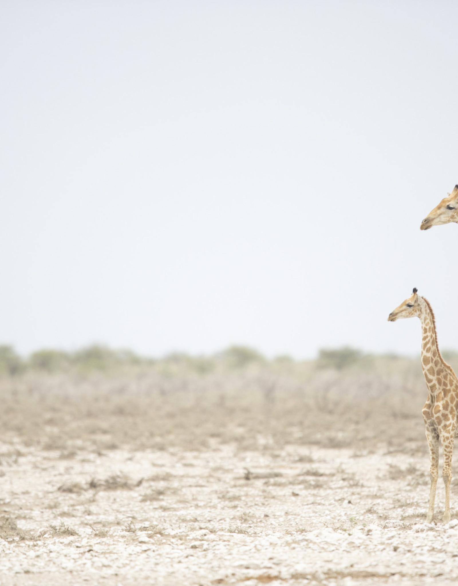 Alicia Hill Parent Giraffe, greeting card
