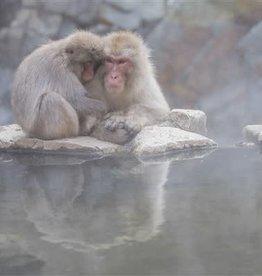 Alicia Hill Japanese Monkeys, greeting card