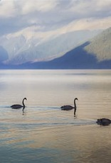 Alicia Hill Three Swans of a Feather
