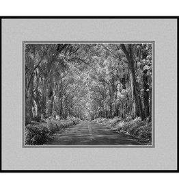 Erskine Wood Koloa Tunnel of Trees, Kauai