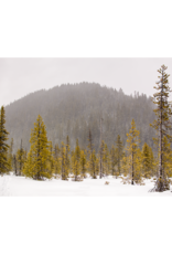"Mark Clifford Tree Line White River Mt Hood, 20"" by 14"" framed photographic print"