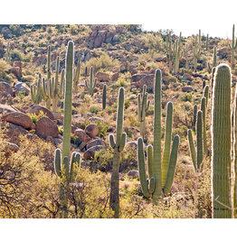 """Mark Clifford Glowing Cactus, 11"""" by 14"""" matted print"""