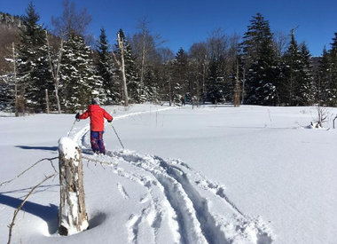 Backcountry Skis w/Scales