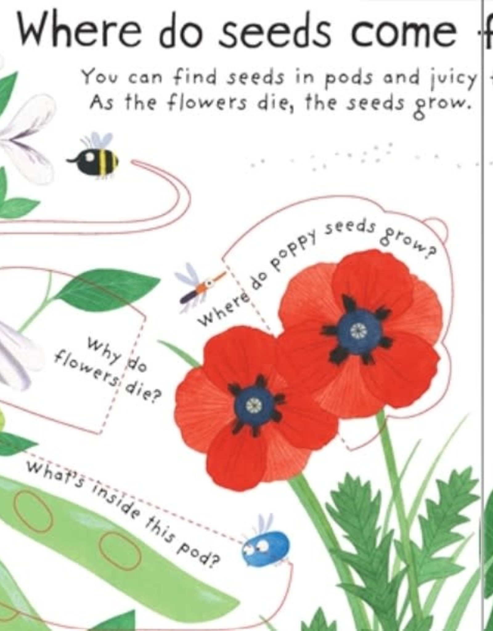 Usborne Usborne Lift-the-Flap First Questions and Answers: How Do Flowers Grow?