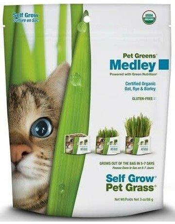 Bell rock growers Pet greens ensemble à pousser d'herbe à chat .