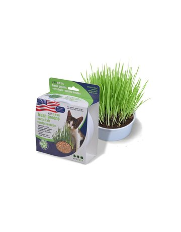Vanness Vanness herbes à chat verts frais (6) .
