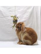 Domaine Animal Domaine Animal pinata à saveurs de kiwi//
