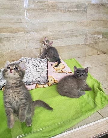 3 petits mousquetaires