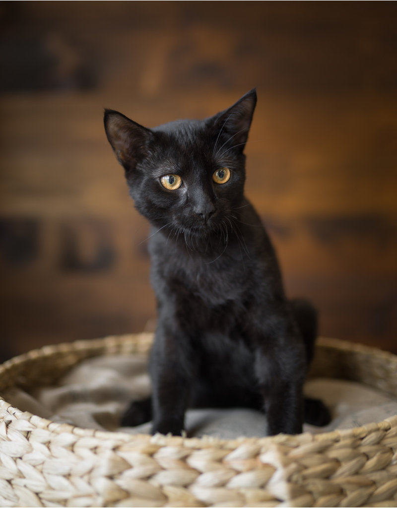 Chaton noir (1)