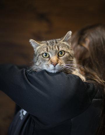 Chatte Grizoune (adoption humanitaire)