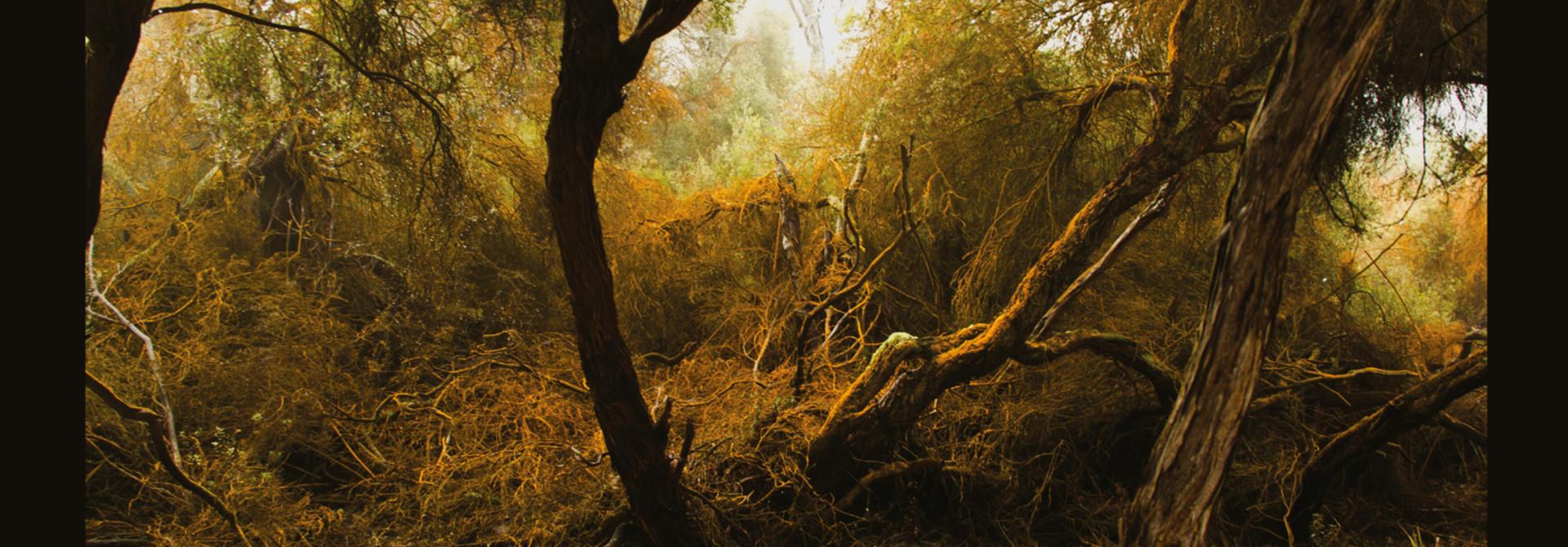 Lubomyr Melnyk • Fallen Trees