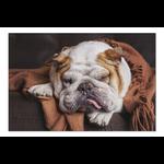 Lantern Press English Bulldog Sleeping 1000pc