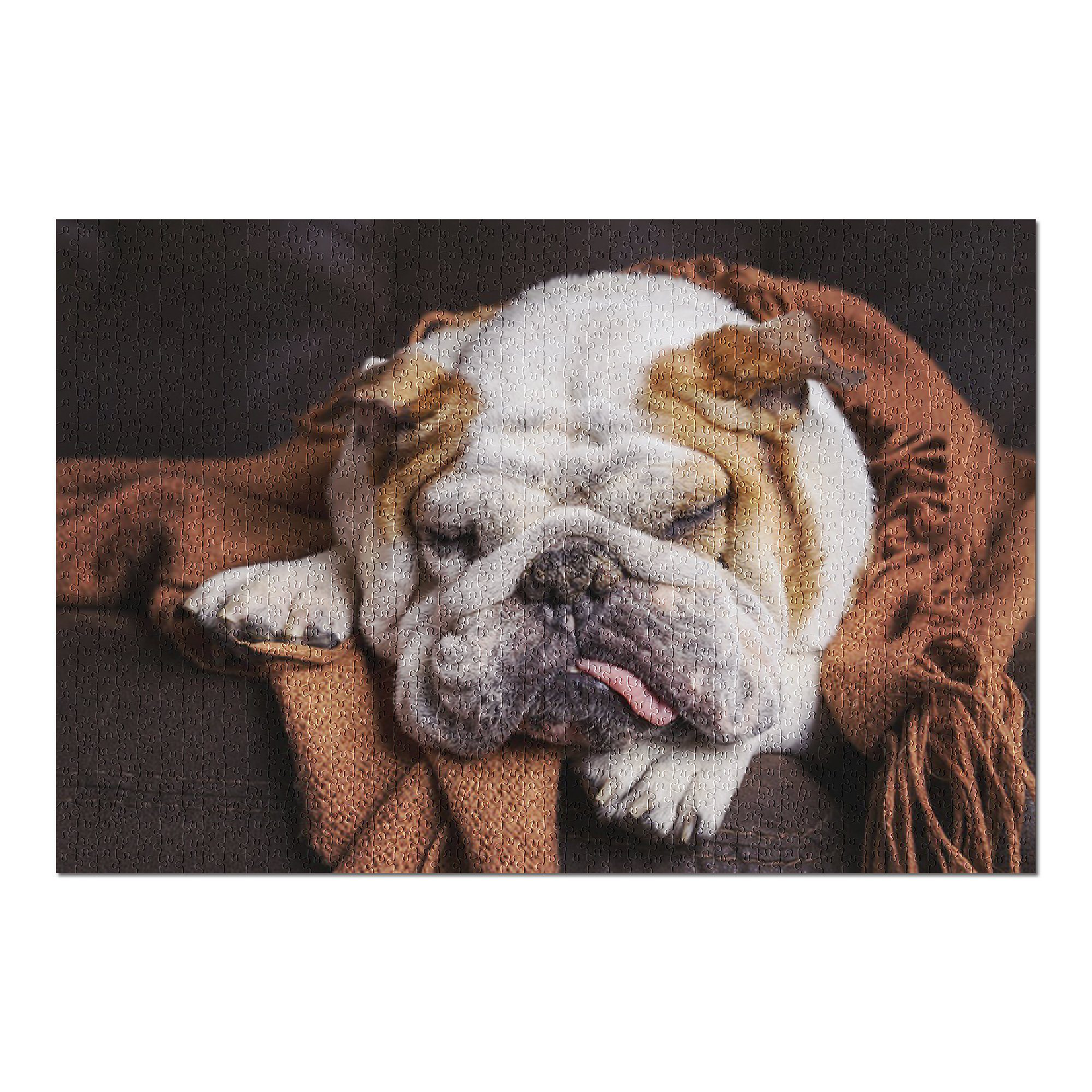 Lantern Press English Bulldog Sleeping 1000pc