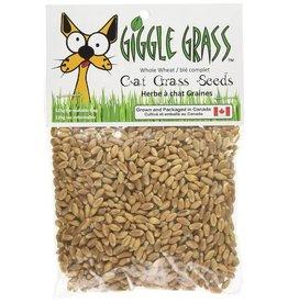 Giggle Grass Giggle Grass Cat Grass Seeds