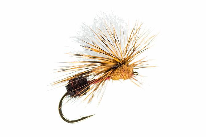 MFC Arrick's Parachute Ant Black / Cinnamon  S12  [Single]