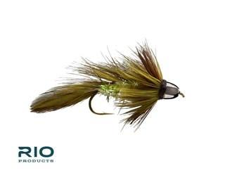 RIO RIO CH Olive Blossom Special S4  [Single]
