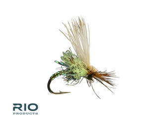 RIO RIO'S Body Double Caddis Olive S14 [Single]