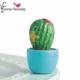 *pre-order* Cactus Mini