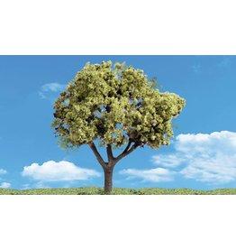 Classics Tree, Early Light 3-4'' (3)