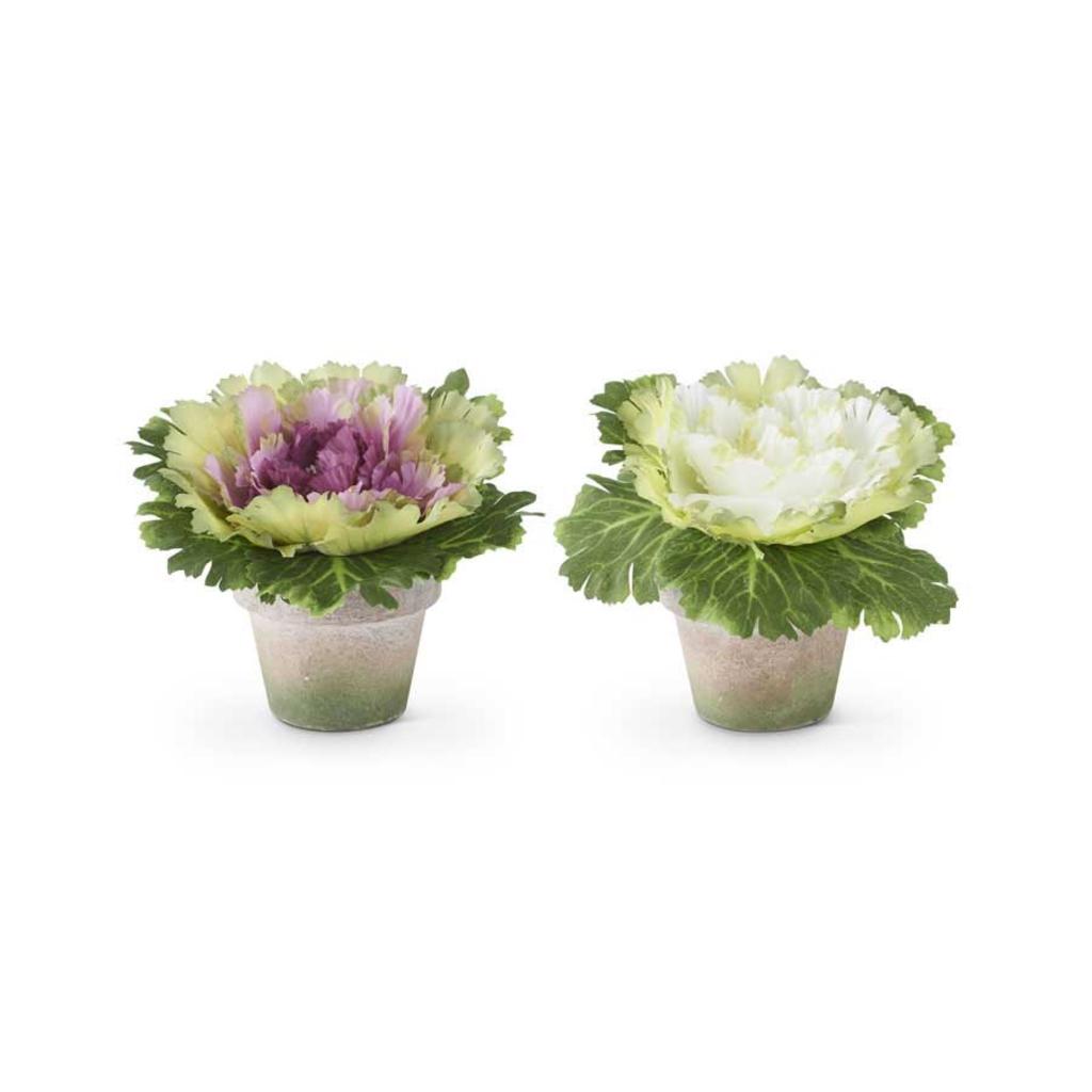 K&K Interiors K&K Cabbage in Pot