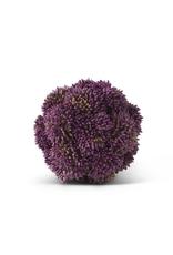 4 Inch Purple Sedum Ball