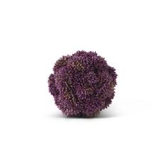 "K&K Interiors K&K 4"" Purple Sedum Ball"