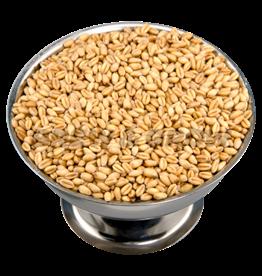 Torrified Wheat Oz