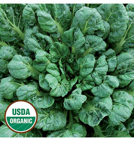 Seed Savers Asian Green - Tatsoi