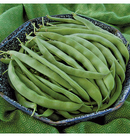 Seed Savers Bean - Bountiful