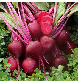 Seed Savers Beet - Early Blood Turnip