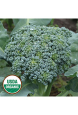Seed Savers Broccoli - De Cicco