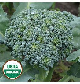 Seed Savers Broccoli - De Cicco