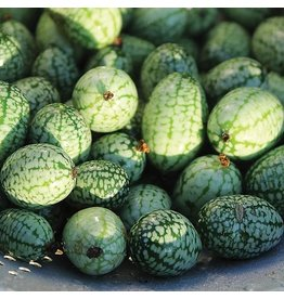 Seed Savers Cucumber - Mexican Sour Gherkin