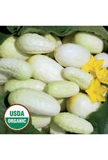 Seed Savers Cucumber - Miniature White