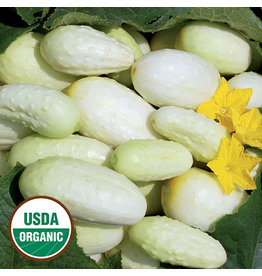 Seed Savers Cucumber - Miniature White