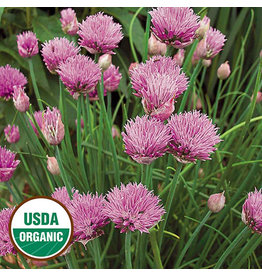 Seed Savers Herb - Chives