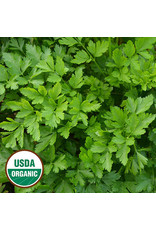 Seed Savers Herb - Giant from Italy Parsley