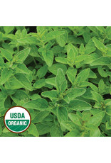 Seed Savers Herb - Greek Oregano