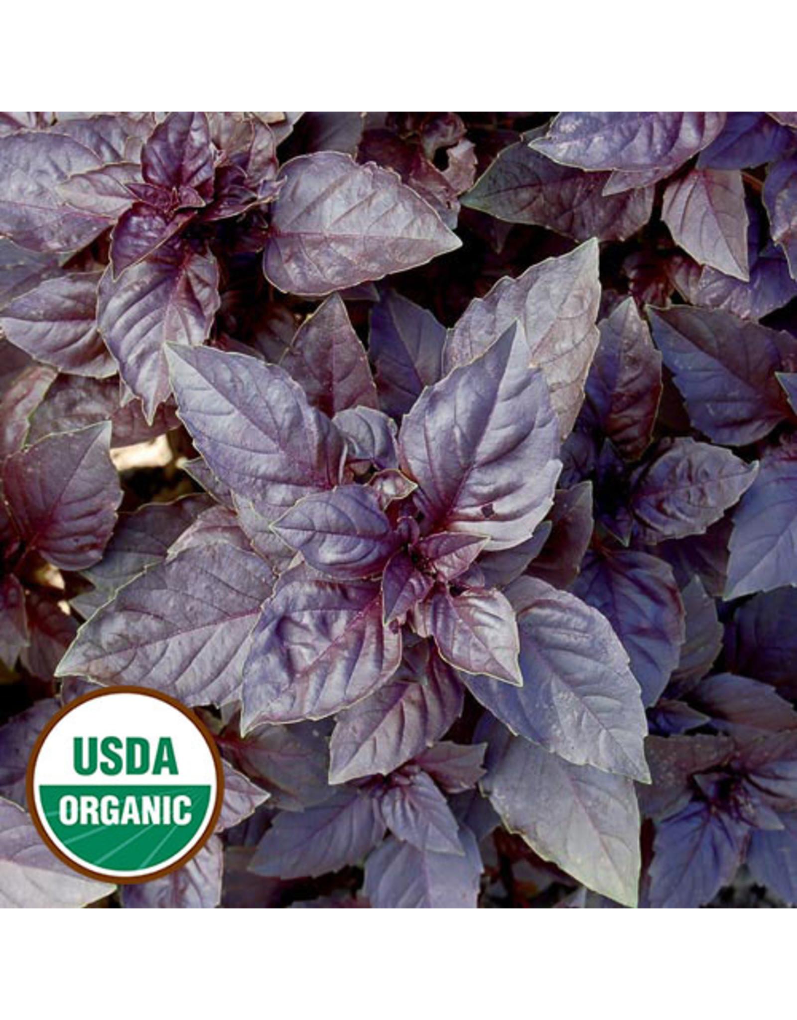 Seed Savers Herb - Dark Opal Basil